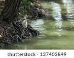 The Heron Sits On The Bank Of...