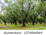 greece  zakynthos  impressive...   Shutterstock . vector #1274064064
