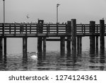 Jetty With Swans