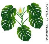 flower and green leaves of... | Shutterstock .eps vector #1274156641