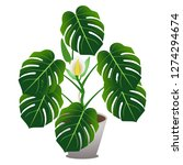 houseplant of a monstera or... | Shutterstock .eps vector #1274294674