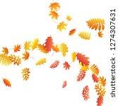 oak  maple  wild ash rowan... | Shutterstock .eps vector #1274307631