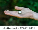 a hand holding a hatched egg | Shutterstock . vector #1274512831