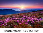 magic pink rhododendron flowers ... | Shutterstock . vector #127451759