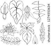 hand drawn tropical plants....   Shutterstock .eps vector #1274553634