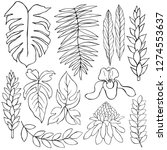 hand drawn tropical plants....   Shutterstock .eps vector #1274553637