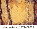 tree trunk background hd... | Shutterstock . vector #1274630251