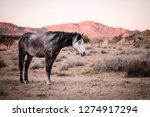 desert horses in namibia | Shutterstock . vector #1274917294