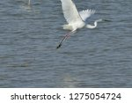 white heron taking off on the...   Shutterstock . vector #1275054724