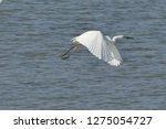 white heron taking off on the...   Shutterstock . vector #1275054727