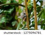 zebra finches on a branch. | Shutterstock . vector #1275096781