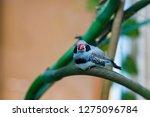 zebra finches on a branch. | Shutterstock . vector #1275096784