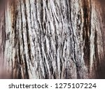 background with trunk of an old ... | Shutterstock . vector #1275107224