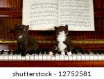 Small Kittens Sit On Keys Of...