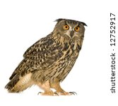 Stock photo eurasian eagle owl bubo bubo months in front of a white background 12752917
