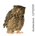 Stock photo eurasian eagle owl bubo bubo months in front of a white background 12752929