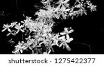 climbing flowers entwined in... | Shutterstock . vector #1275422377