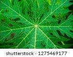 top view natural fresh green... | Shutterstock . vector #1275469177
