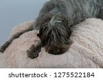 shaggy  dog on a pink poof. the ... | Shutterstock . vector #1275522184