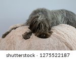 shaggy  dog on a pink poof. the ... | Shutterstock . vector #1275522187