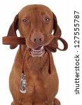Stock photo dog holds leash in mouth ready for a walk 127555787