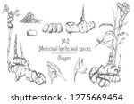 set hand drawn of ginger roots  ... | Shutterstock .eps vector #1275669454