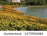 orange and yellow flowers...   Shutterstock . vector #1275903484