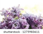 a bouquet of lilacs in front of ... | Shutterstock . vector #1275983611