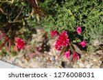 pretty flowers blooming in the... | Shutterstock . vector #1276008031
