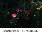 pretty flowers blooming in the... | Shutterstock . vector #1276008037