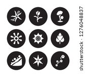 9 vector icon set   vanilla ... | Shutterstock .eps vector #1276048837
