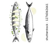 drawing of fresh mackerel and  ... | Shutterstock .eps vector #1276062661