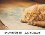 Stock photo peaceful orange red tabby cat male kitten curled up sleeping white background 127608605
