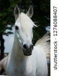 Stock photo arabian horse portrait 1276088407