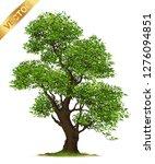 isolated trees on white... | Shutterstock .eps vector #1276094851
