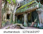 giant tree root entangling the...   Shutterstock . vector #1276163197