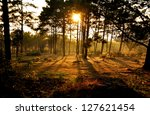 Sunset Behind Tree In The Forest