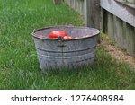tomatoes in a bucket next to a...   Shutterstock . vector #1276408984