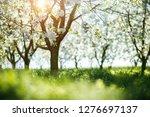 bright ornamental garden with... | Shutterstock . vector #1276697137