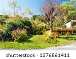 Garden With Flowers In The...