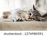 Stock photo nice small kitty lying on canvas fabric 1276980391