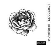 rose botanical illustration.... | Shutterstock .eps vector #1277063677
