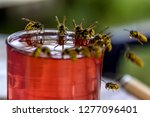 Wasps On Glass With Drink....