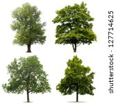 Four Trees Isolated White Background - Fine Art prints