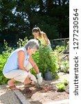 granddaughter helping... | Shutterstock . vector #1277230564