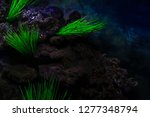 depths of the seabed with reefs ... | Shutterstock . vector #1277348794
