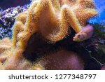 seabed with underwater life ... | Shutterstock . vector #1277348797