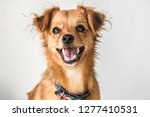 Stock photo dogs and pet photography 1277410531