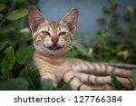 Stock photo smiling cat 127766384
