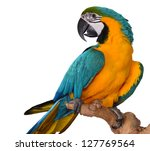 macaw parrot isolated on white | Shutterstock . vector #127769564